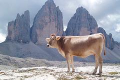 vacas-sagradas-hamburguesas_thumb