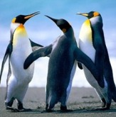 http://media.photobucket.com/image/penguins/kremar15/Penguins.jpg