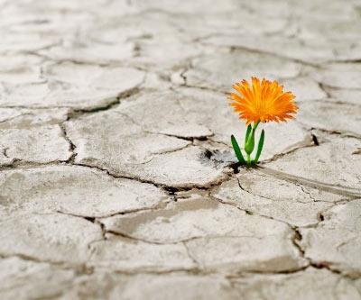 la-esperanza-flor-crece-en-medio-de-sequedal