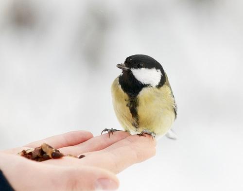 birdie_trust_sm